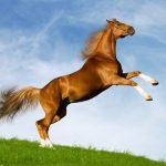 حصان 2019 أنواع الحصان ومعلومات كاملة صور ميكس 2