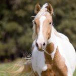 حصان 2019 أنواع الحصان ومعلومات كاملة صور ميكس 22