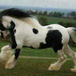 حصان 2019 أنواع الحصان ومعلومات كاملة صور ميكس 27
