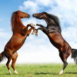حصان 2019 أنواع الحصان ومعلومات كاملة صور ميكس 3