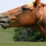 حصان 2019 أنواع الحصان ومعلومات كاملة صور ميكس 32