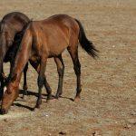 حصان 2019 أنواع الحصان ومعلومات كاملة صور ميكس 34