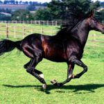 حصان 2019 أنواع الحصان ومعلومات كاملة صور ميكس 45