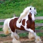حصان 2019 أنواع الحصان ومعلومات كاملة صور ميكس 5