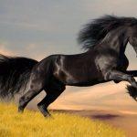 حصان 2019 أنواع الحصان ومعلومات كاملة صور ميكس 8