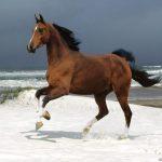 حصان 2019 أنواع الحصان ومعلومات كاملة صور ميكس 9