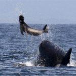 حوت ومعلومات كاملة عن حياة الحوت صور ميكس 10