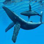 حوت ومعلومات كاملة عن حياة الحوت صور ميكس 12
