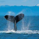 حوت ومعلومات كاملة عن حياة الحوت صور ميكس 17