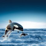حوت ومعلومات كاملة عن حياة الحوت صور ميكس 20