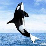 حوت ومعلومات كاملة عن حياة الحوت صور ميكس 21