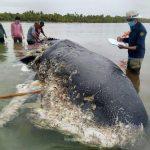 حوت ومعلومات كاملة عن حياة الحوت صور ميكس 22