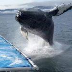 حوت ومعلومات كاملة عن حياة الحوت صور ميكس 27