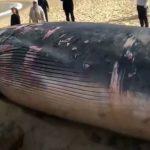 حوت ومعلومات كاملة عن حياة الحوت صور ميكس 30