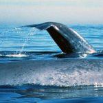حوت ومعلومات كاملة عن حياة الحوت صور ميكس 34