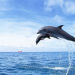 حوت ومعلومات كاملة عن حياة الحوت صور ميكس 37