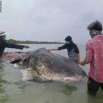 حوت ومعلومات كاملة عن حياة الحوت صور ميكس 41