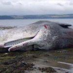 حوت ومعلومات كاملة عن حياة الحوت صور ميكس 43