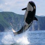 حوت ومعلومات كاملة عن حياة الحوت صور ميكس 6