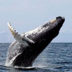 حوت ومعلومات كاملة عن حياة الحوت صور ميكس 9