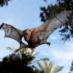 خفاش تعرف على حياة الخفاش وأنوعها صور ميكس 23