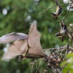 خفاش تعرف على حياة الخفاش وأنوعها صور ميكس 32