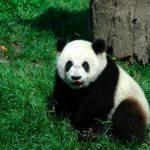 دب 2019 معلومات كاملة عن الدب صور ميكس 16