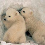دب 2019 معلومات كاملة عن الدب صور ميكس 25