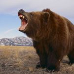 دب 2019 معلومات كاملة عن الدب صور ميكس 33