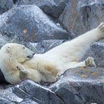 دب 2019 معلومات كاملة عن الدب صور ميكس 38