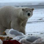دب 2019 معلومات كاملة عن الدب صور ميكس 40