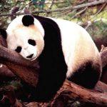 دب 2019 معلومات كاملة عن الدب صور ميكس 44
