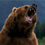 دب 2019 معلومات كاملة عن الدب صور ميكس 5