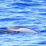 دلفين تعرف على حياة وأنواع الدلفين صور ميكس 17