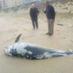 دلفين تعرف على حياة وأنواع الدلفين صور ميكس 28