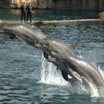 دلفين تعرف على حياة وأنواع الدلفين صور ميكس 31