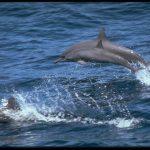 دلفين تعرف على حياة وأنواع الدلفين صور ميكس 36