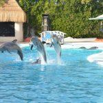 دلفين تعرف على حياة وأنواع الدلفين صور ميكس 42