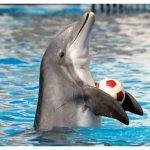 دلفين تعرف على حياة وأنواع الدلفين صور ميكس 9