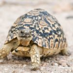 سلاحف 2109 تعرف على حياة السلاحف صور ميكس 11