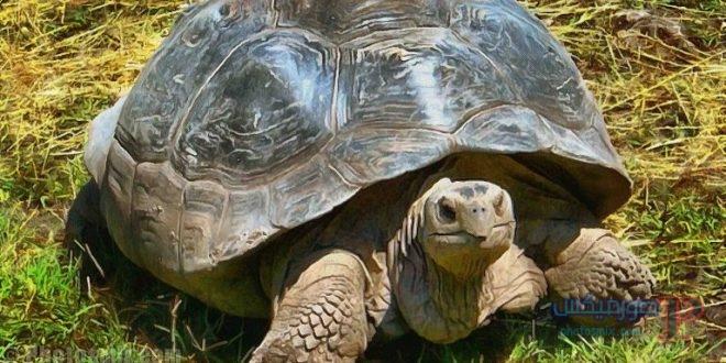 سلاحف 2109 تعرف على حياة السلاحف صور ميكس 15