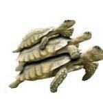 سلاحف 2109 تعرف على حياة السلاحف صور ميكس 16