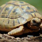 سلاحف 2109 تعرف على حياة السلاحف صور ميكس 18