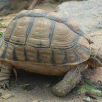سلاحف 2109 تعرف على حياة السلاحف صور ميكس 2