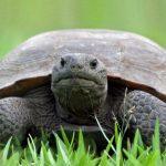 سلاحف 2109 تعرف على حياة السلاحف صور ميكس 20