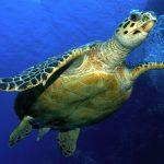 سلاحف 2109 تعرف على حياة السلاحف صور ميكس 30
