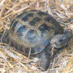 سلاحف 2109 تعرف على حياة السلاحف صور ميكس 34
