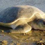 سلاحف 2109 تعرف على حياة السلاحف صور ميكس 36