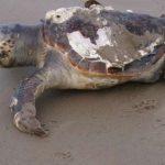 سلاحف 2109 تعرف على حياة السلاحف صور ميكس 38