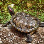 سلاحف 2109 تعرف على حياة السلاحف صور ميكس 41